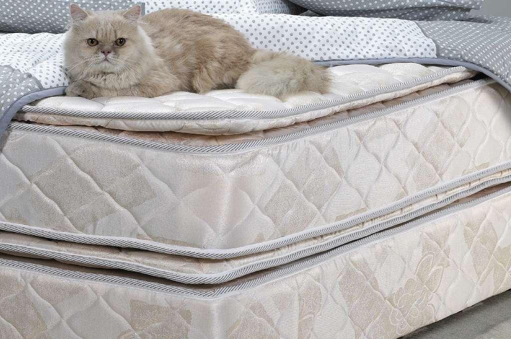 gatto sopra ai materassi